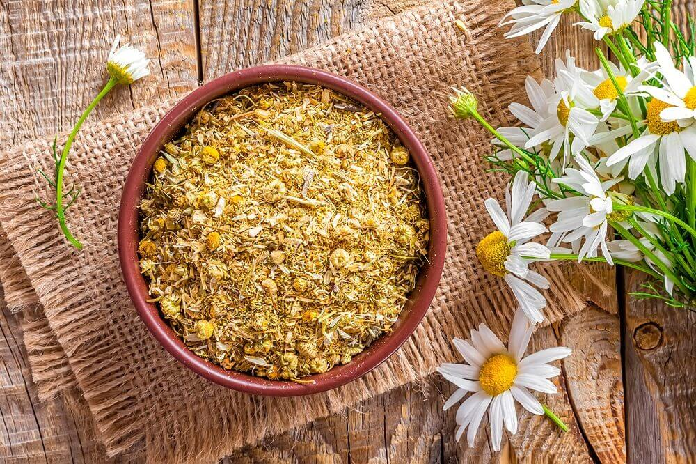 Chamomile, one of the herbs and spices for hair growth
