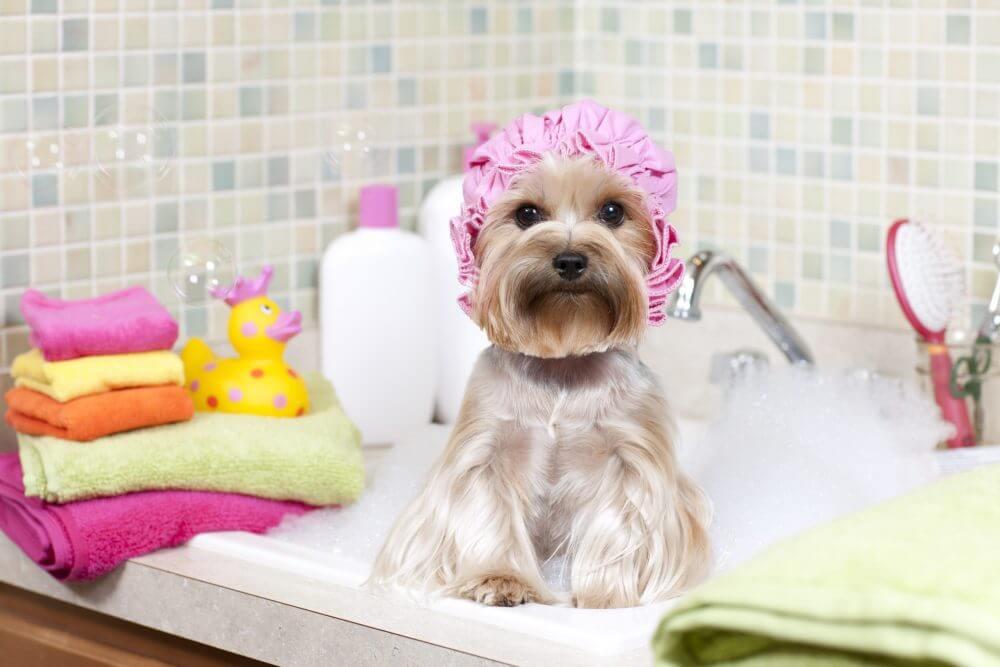 A clean pet.
