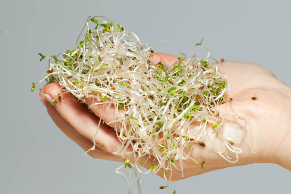 Raw sprouts and other roots