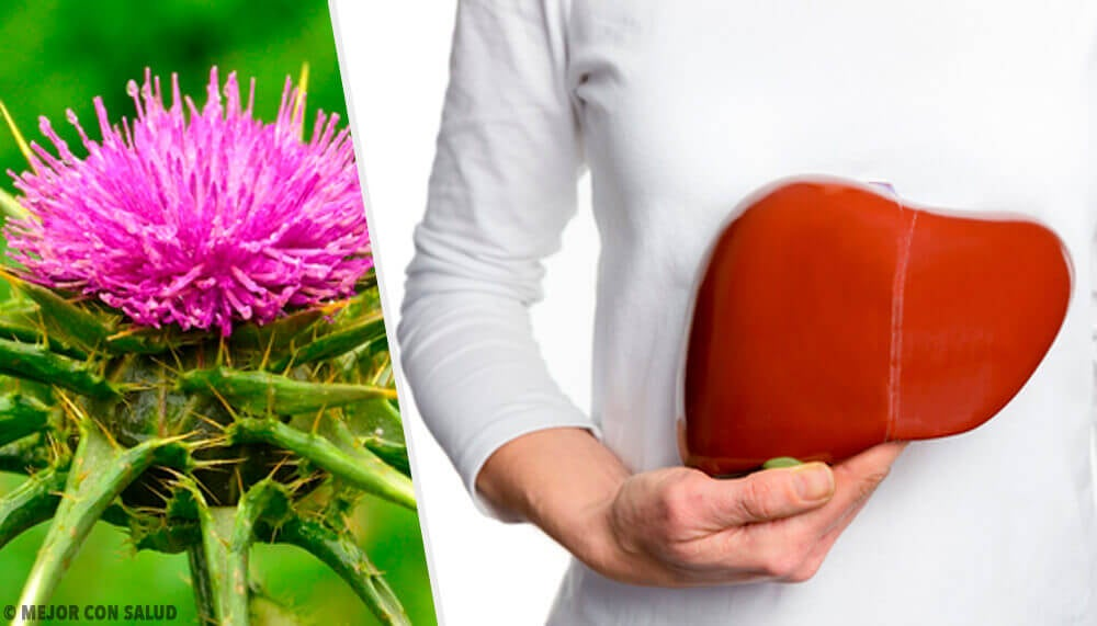 Milk Thistle: A Plant with Incredible Benefits