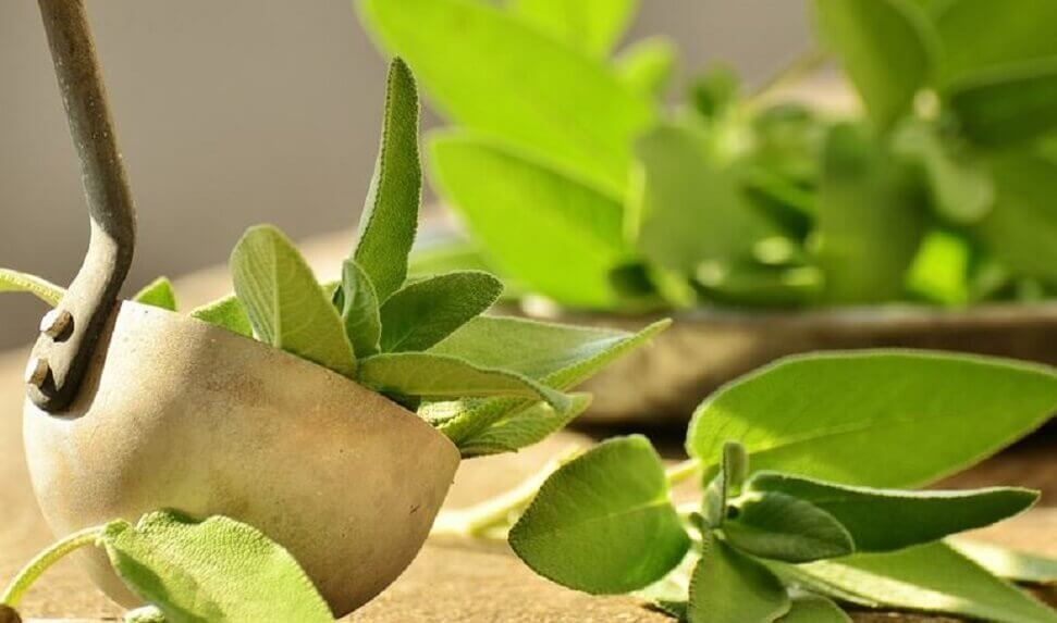 Sage for heel pain.