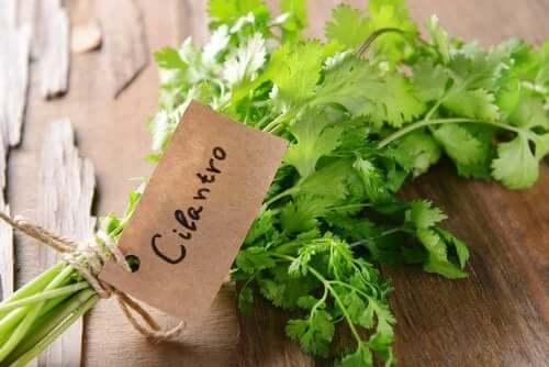 A bundle of cilantro.