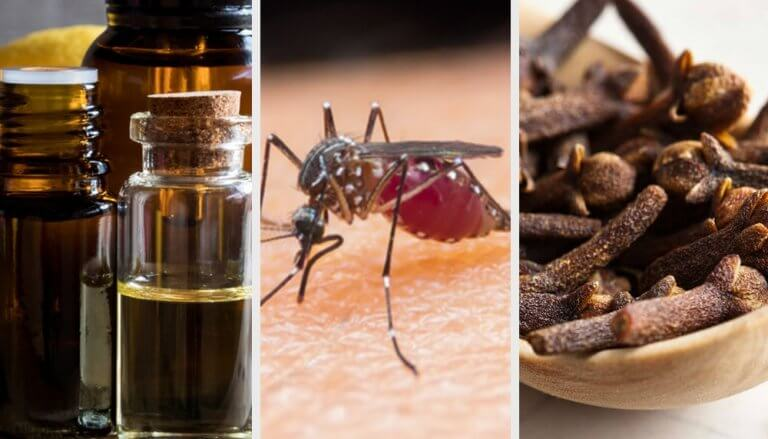 10 Aromas that Fight off Mosquitoes