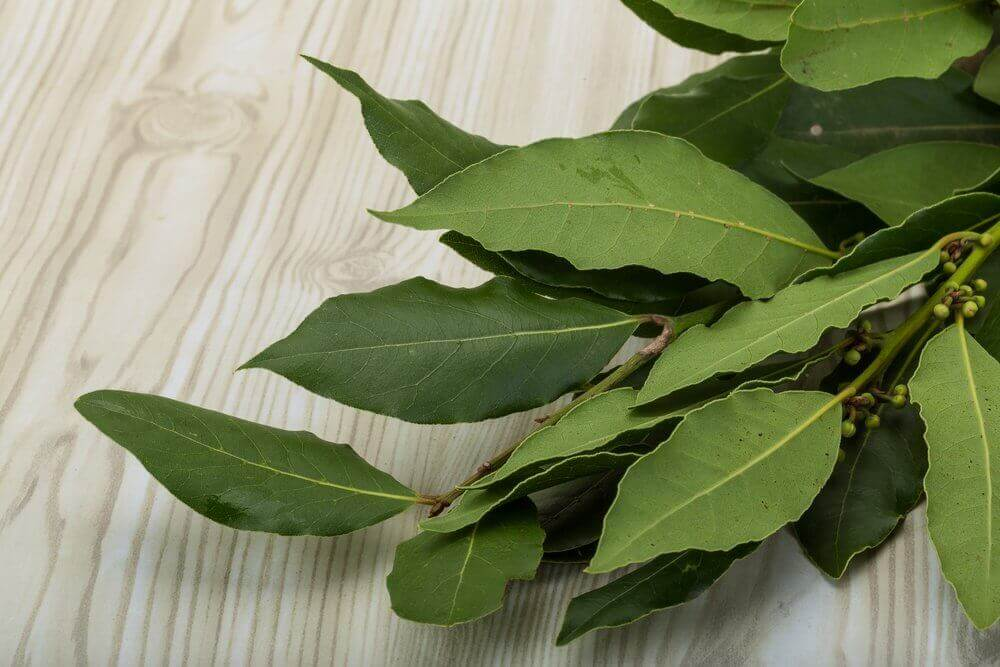 Benefits of laurel