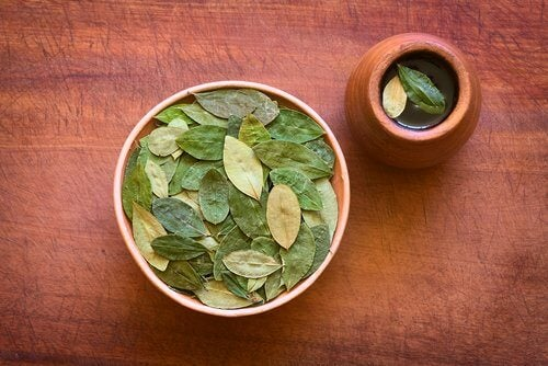 Coca leaf infusion and its surprising health benefits