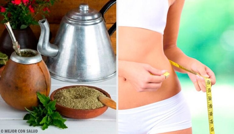 Can Mate Tea Really Help You Lose Weight?