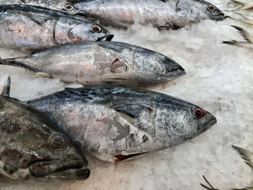 Learn How to Identify Fish that's Gone Bad