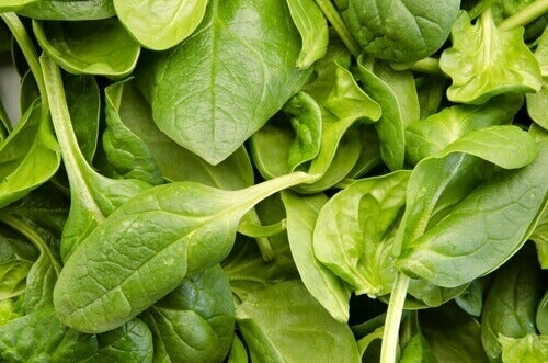 Fresh green spinach reduce cancer risk