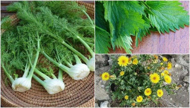 8 Surprising Edible Plants