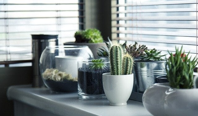 5 Different Ideas to Plant a Cactus