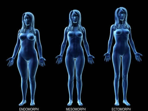 Find Out What's the Ideal Diet for Your Body Type