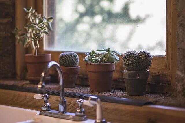 Plant a Cactus