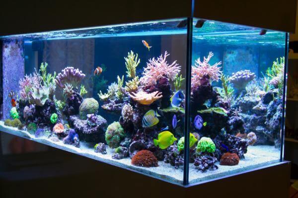 Large and vibrant aquarium