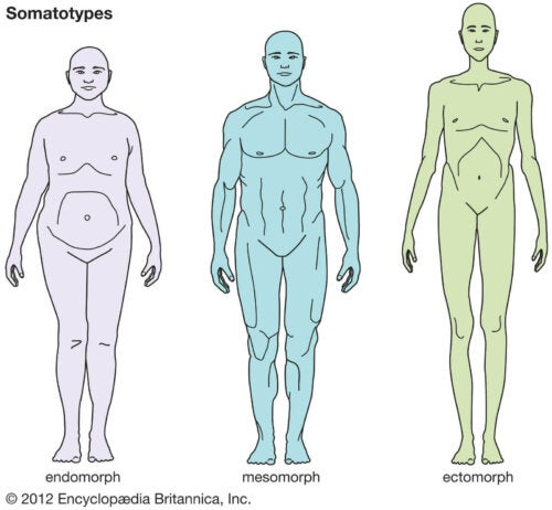 Some different body shapes and their ideal diet.