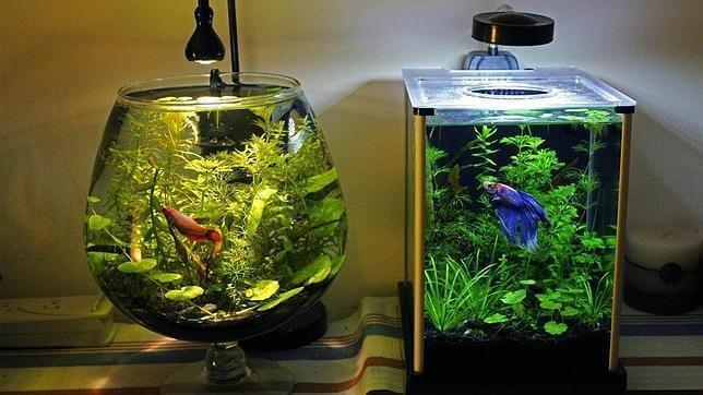 The Best Way to Clean an Aquarium