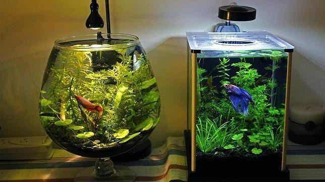 The Best Way to Clean an Aquarium