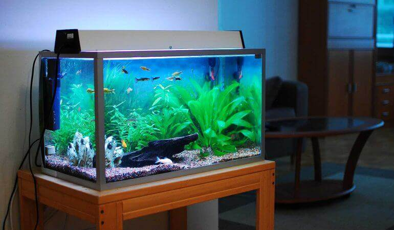 What do you need to clean an aquarium
