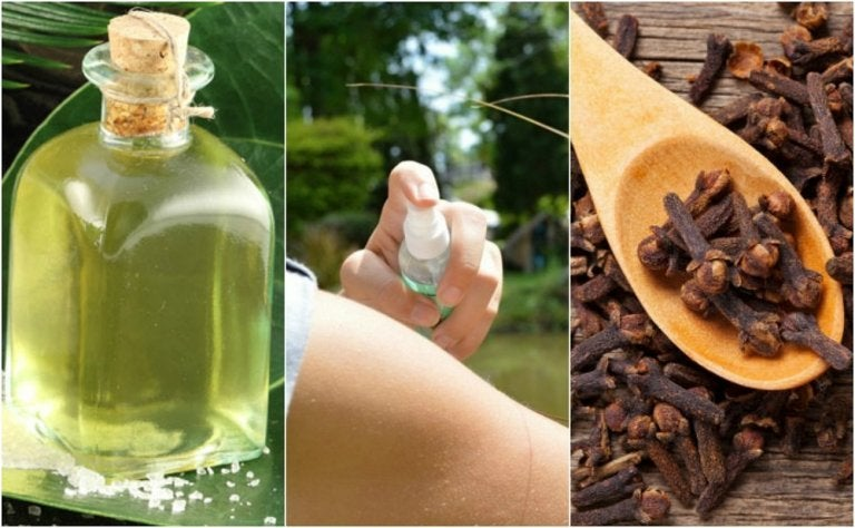 The 5 Best Homemade Repellents You Can Make
