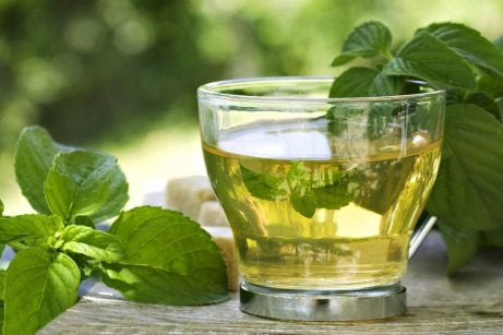 Iced mint tea.