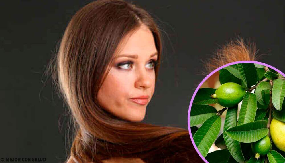 Guava Leaves for Damaged Hair