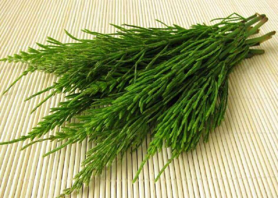 horsetail for urinary incontinence