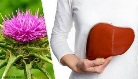 milk thistle for fatty liver