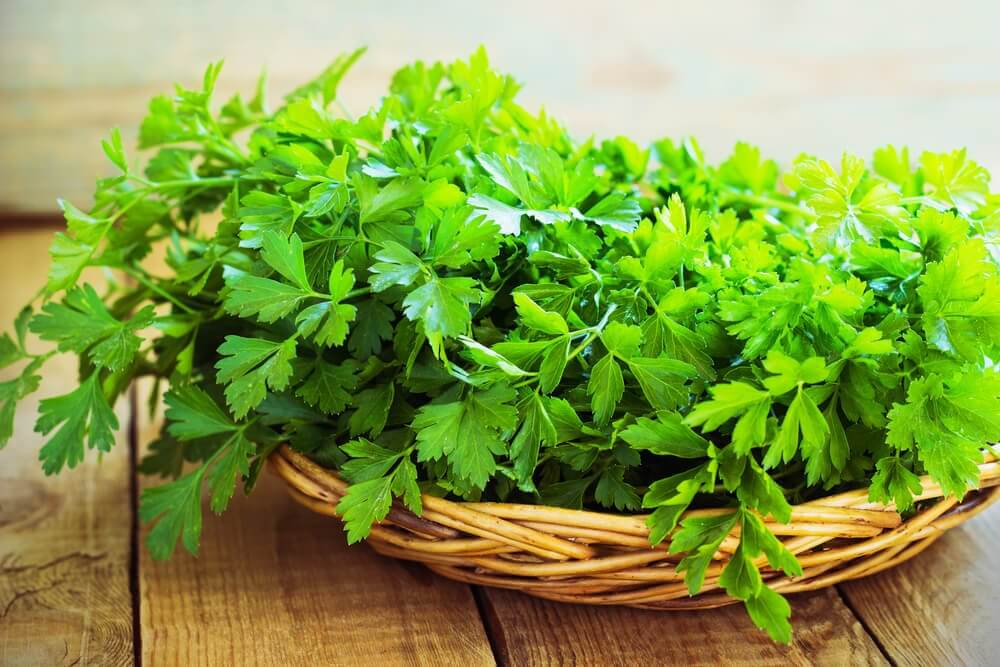 Parsley's Properties for Healthy Kidneys