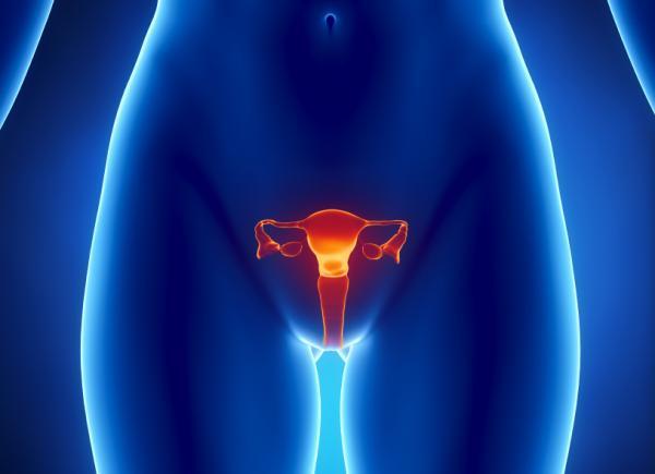 Ovaries.