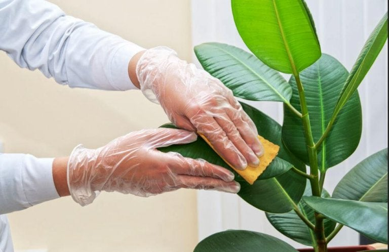How to Clean the Leaves of Houseplants
