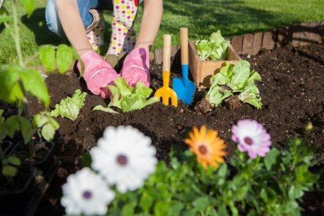 7 Ways to Use Vinegar in Your Garden