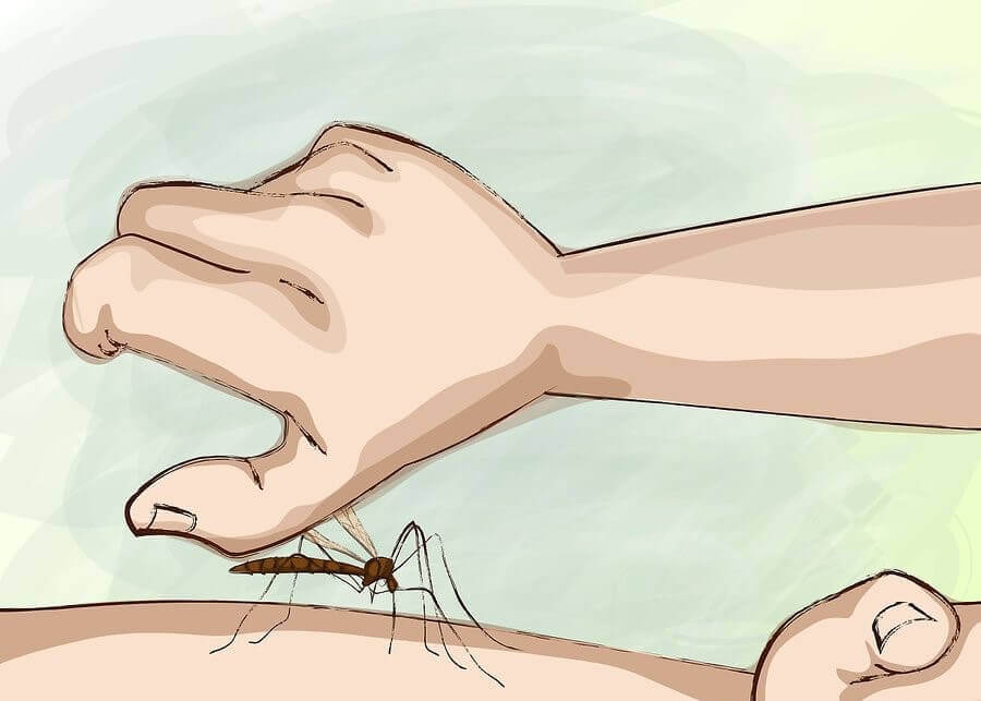 How Can You Avoid Mosquito Bites During the Night?