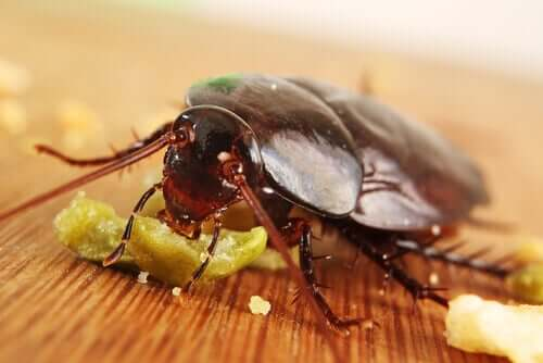 Some cockroaches die by eating poison.