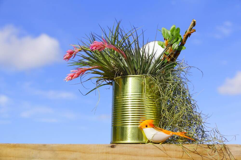 A mini-garden in a recycled tin can