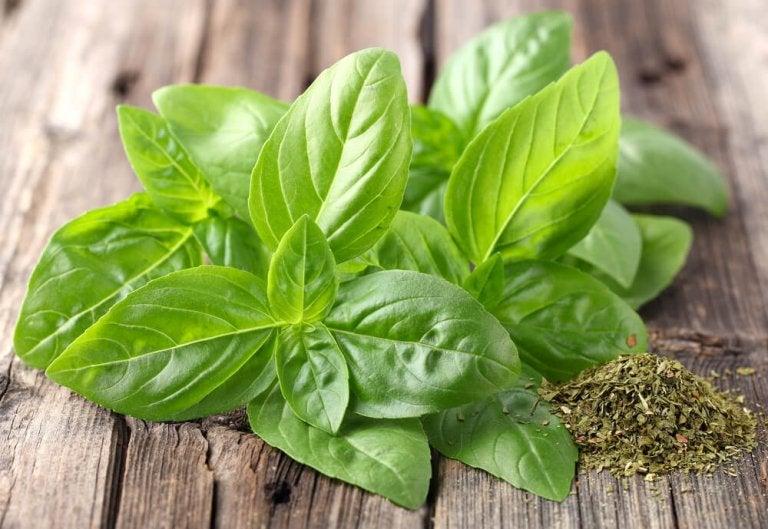 The Incredible Medicinal Properties of Basil