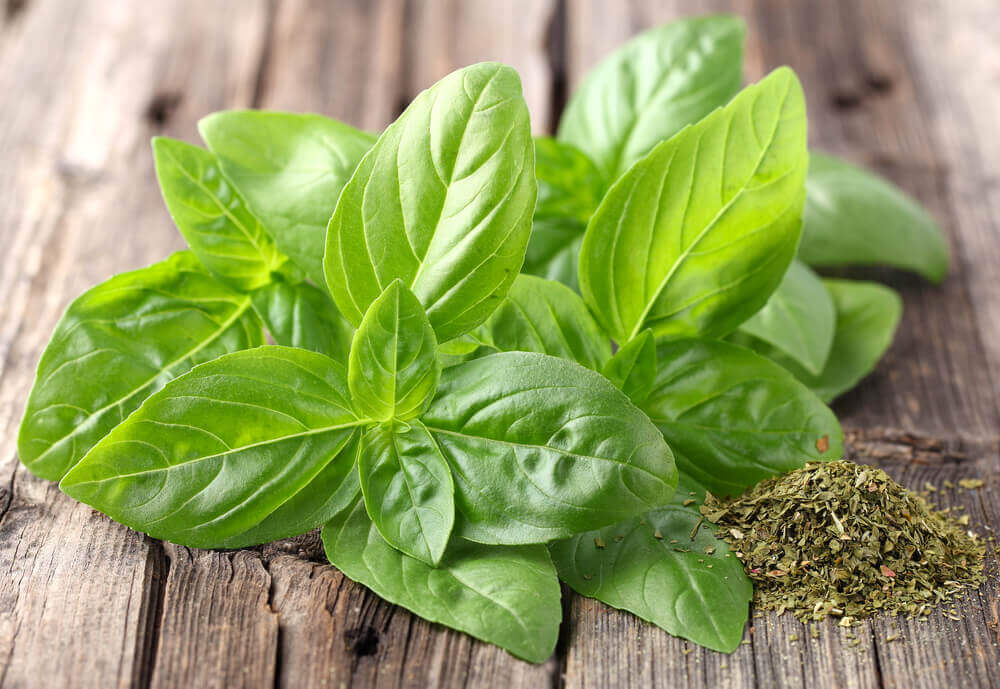 The Incredible Medicinal Properties of Basil