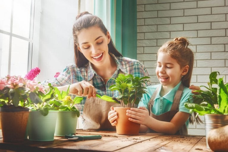 Houseplants That Will Make You Healthier