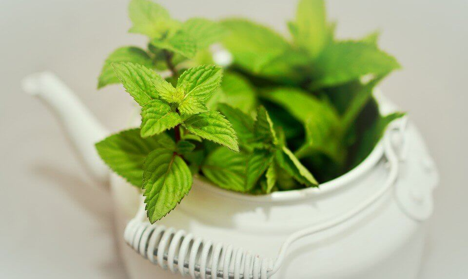 mint for vomiting.