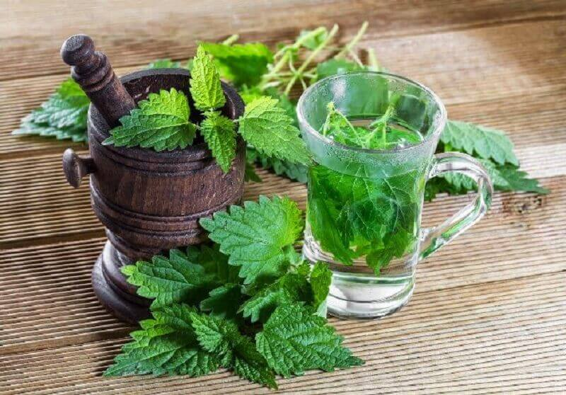 Nettle and Plantain Tea