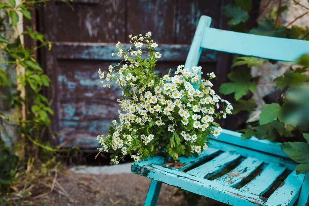 A flower an old chair