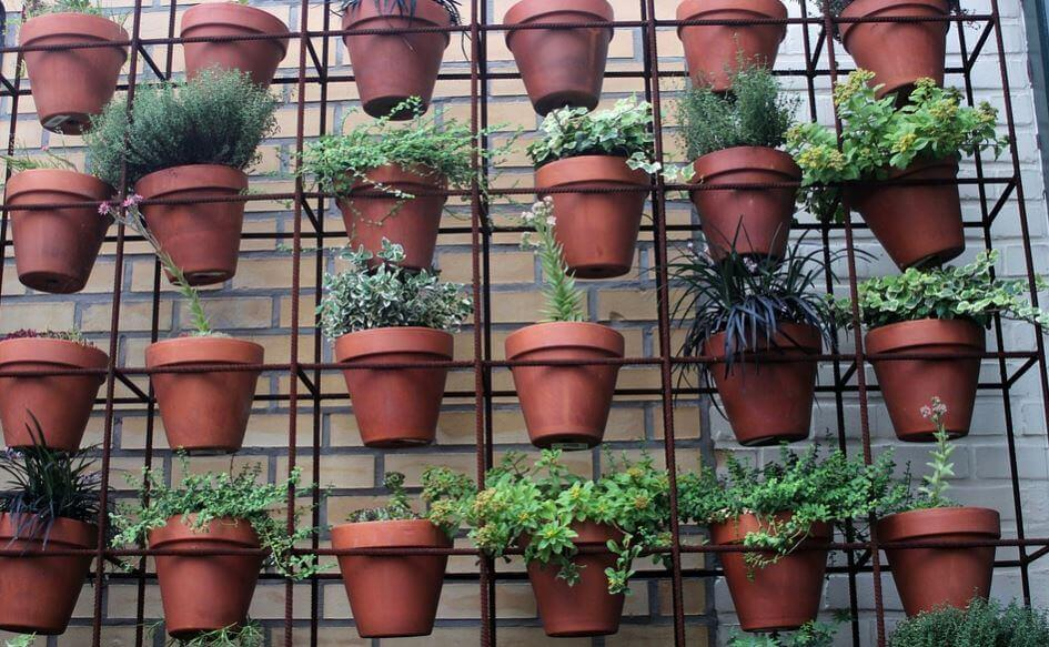 An arrangement of hanging plant pots