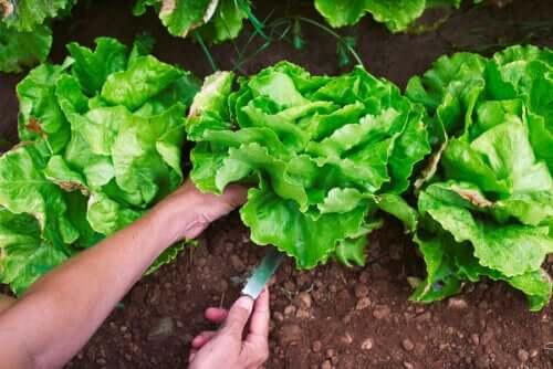 Four Designs for Home Vegetable Gardens