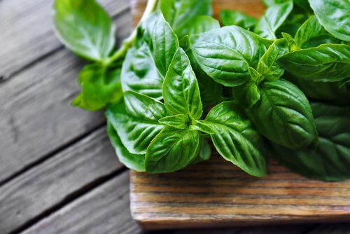 Basil in a wooden pot