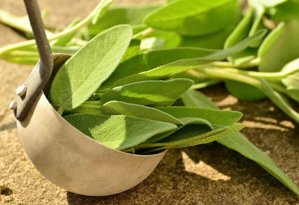 Some sage which is a remedy for smelly feet.