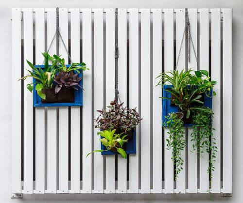 A vertical garden.