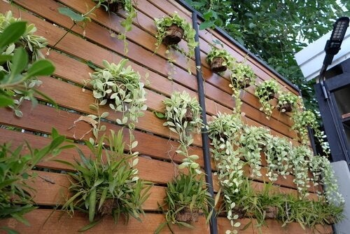 Four Ideas for Transforming an Ordinary Wall into a Vertical Garden