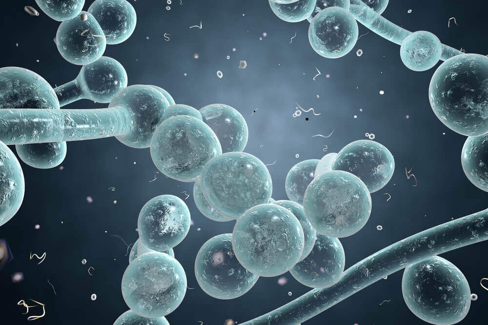 Natural Solutions To Relieve The Symptoms of Candidiasis