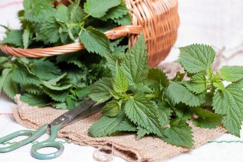 Use nettle leaves.