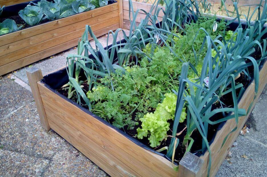 A vegetable garden in a grow box