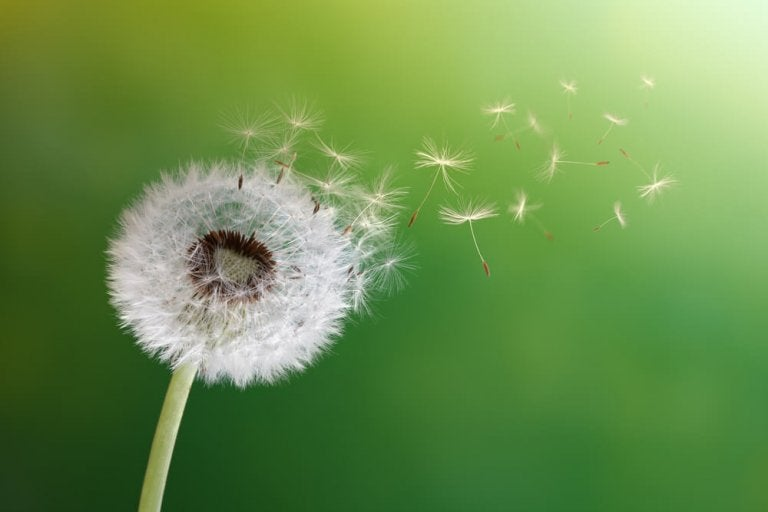 Learn All About the Benefits of Dandelion