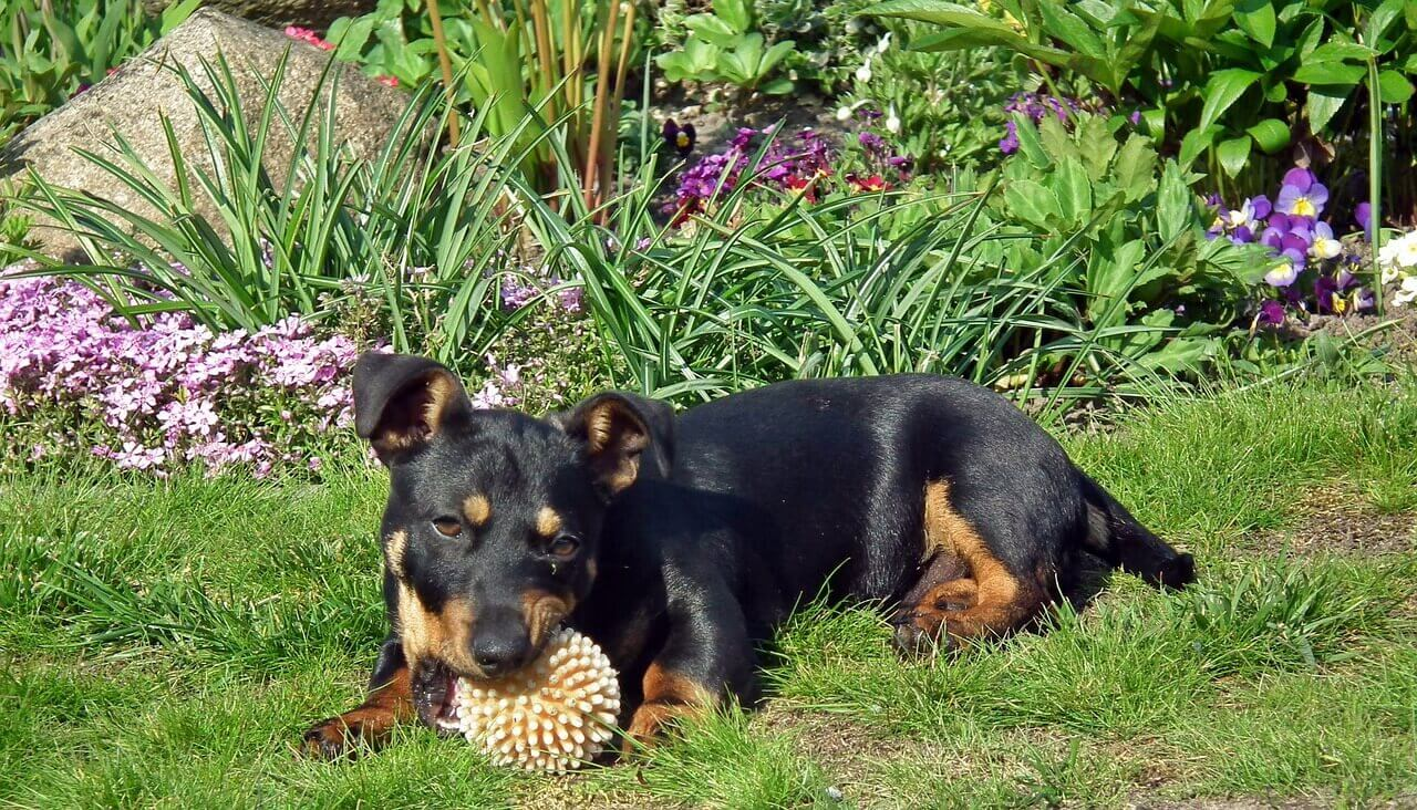 Plants that You Can Use as Natural Flea and Tick Repellent